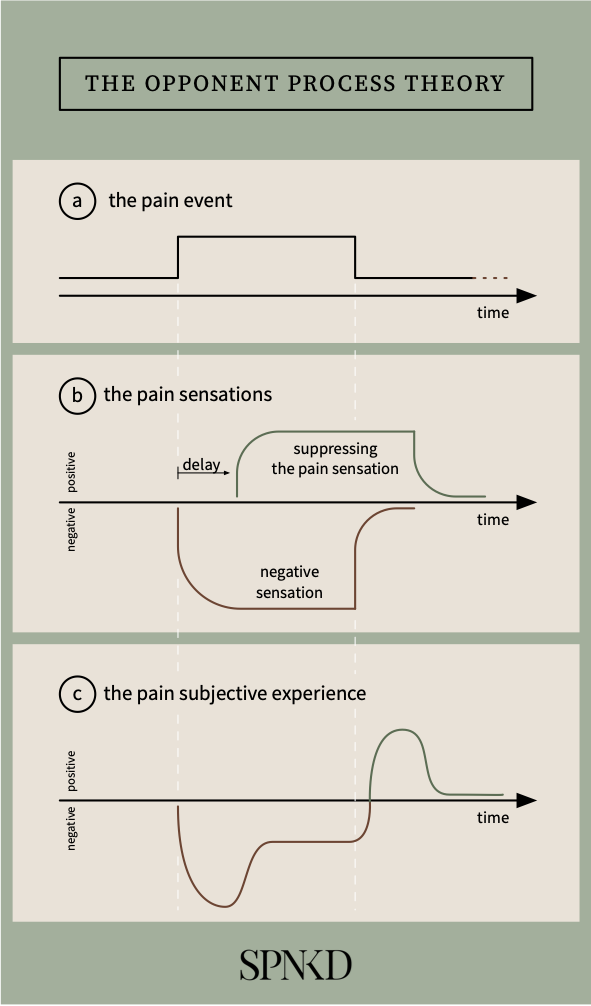 infographic about the pain systems in the brain
